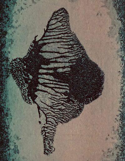 Christine Sloman, Metamorphosis, H8.5 x W5.5 cm, 2 plate etching. Varied edition.